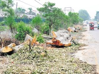 Huda starts axing 256 trees to widen Sector 17/18 road