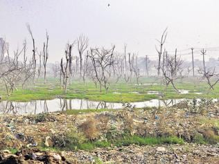 Plantation projects on an overdrive but green cover shows little increase