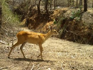 Spotted: Three most rare species in Palamu tiger reserve