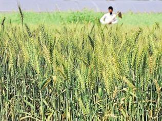 'Lagaan': Crop insurance scheme draws farmers' flak