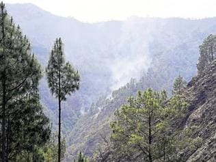 India's forests valued at Rs 115 trillion, but tribals unlikely to get a share