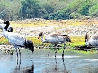 Biodiversity law crippled at the grassroots