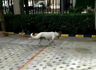 Wembley Estate RWA booked for beating stray dog