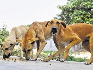 'Every hour 31 people are bitten by stray dogs in state'