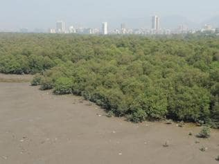 Saving wetlands:Set up grievance cell within six weeks, HC tells state