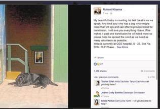 SOS call on Facebook helps save a labrador's life