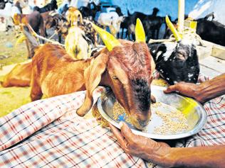 BJP leader should explain what he means by eco-friendly Eid