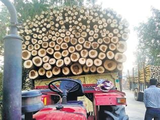 Poplar growers reeling under crisis due to steep fall in prices