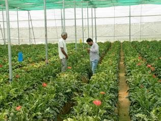 Horticulture dept in Gurgaon to lease out land for organic farming