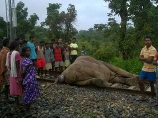 Elephant and its calf mowed down by express train in Ranchi