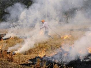 Pollution: High court tells Delhi's neighbours to stop stubble burning