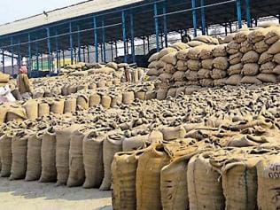 Basmati prices surge as 60% produce harvested