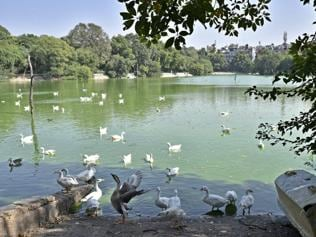 Six more ducks found dead in Hauz Khas Park, report expected on Monday