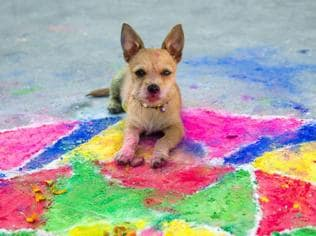 Your furry best friends need some love: Tips to keep dogs safe this Diwali