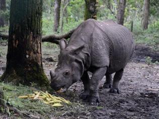Half of India's wildlife in danger of extinction: Living Planet Report 2016