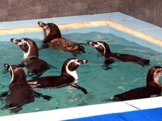 Penguin death in Mumbai zoo: Cong files petition with Lokayukta