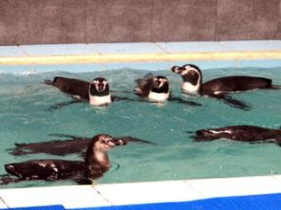 Mumbai penguin contractor forfeited Rs1.4 crore deposit for lying about joint venture