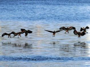 Jharkhand shivers at 12 degree, migratory birds flock to the state