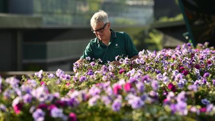 Wimbledon gardener Christopher McCarron puts the finishing touches to a display at The All England Tennis Club, ahead of play on the first day.