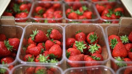 Trays of strawberries sit at All England Lawn Tennis and Croquet Club. The change in weather will lead to good playing conditions in coming days with sunny spells and clear skies interspersed with some cloud and gentle winds. Meteorologists have however warned of higher UV and pollen levels.