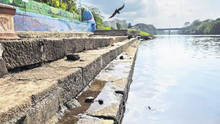 Fight to keep Pune's post-monsoon spring season alive and flowing