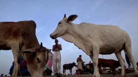Locked in room inside a school, 17 cows die of starvation in Gwalior