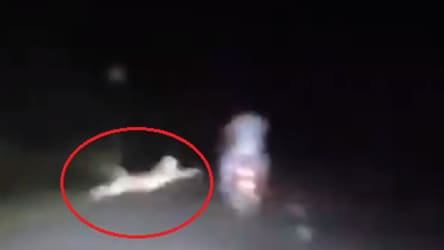 Leopard pounces on bikers, misses by inches. Heart-stopping video captured