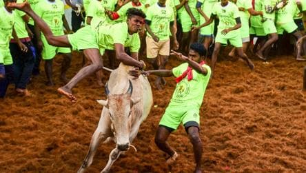 One killed, 30 injured in bull-taming sport Jallikattu in Tamil Nadu
