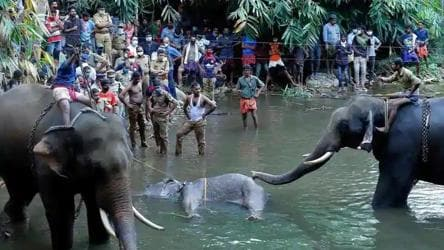 1 held in connection with pregnant elephant's death in Kerala: Minister