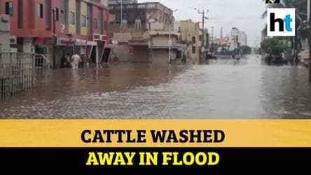 Gujarat: Knee-deep water throws life out of gear, cattle washed away in flood