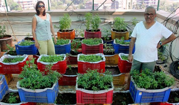 Residents of Monisha society show their terrace garden.(Bhushan Koyande/HT)