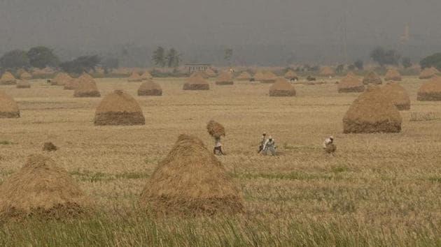 Farmers work in fields, in Andhra Pradesh.(Reuters File Photo)
