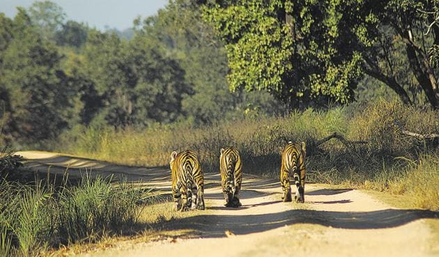 The PIL said forest officers did not seek mandatory permission before erecting the fencing and before setting up tiger safaris.(Pic for representation)