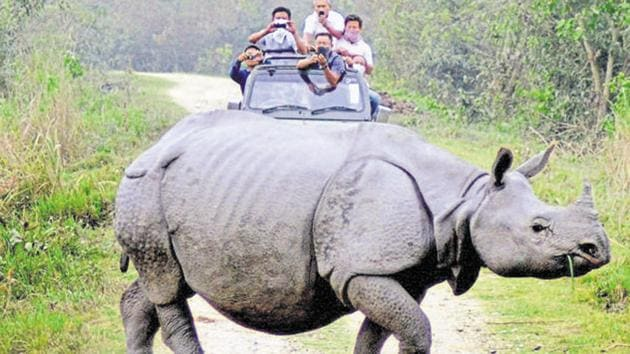 Despite dozens of poacher arrests in the past 3 to 4 months, killing of rhinos in the Kaziranga National Park hasn't abated.(PTI file)