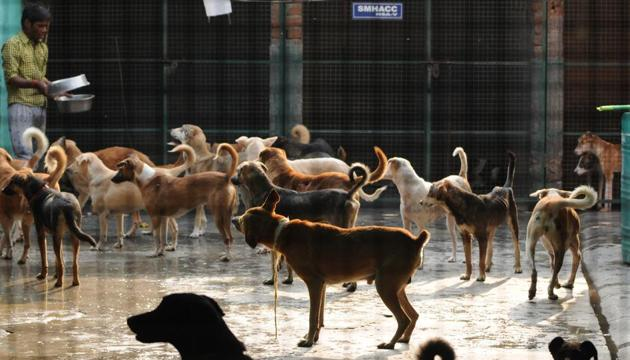 Stray dogs in a shelter house in Noida, India.(HT Photo/ Representative image)