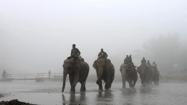 Nepalese mahouts ride their elephants to the polo grounds during the 35th International Elephant Polo Competition Kawasuti Gondhat, Chitwan District, some 235 kms from Kathmandu on December 2, 2016.(AFP Photo)