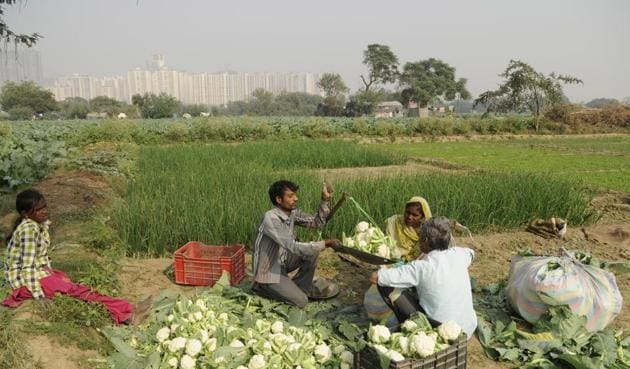 Farmers report a steep fall in vegetable wholesale prices since the implementation of demonetisation. Last week, at two wholesale markets in Madhya Pradesh, onions were sold for Re 1 per kilogramme. Similarly, tomatoes cost less than Rs 2 per kg in Andhra Pradesh and Chandigarh.(Burhaan Kinu/HT PHOTO)