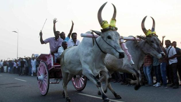 People take part for supporting of Jallikattu and protest against Union Government in Coimbatore on Thursday, Jan 12, 2016.(PTI)