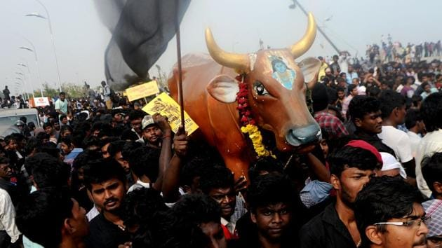 Protesters carry a replica of a bull as they shout slogans during a demonstration against the ban on Jallikattu in Chennai.(AFP Photo)