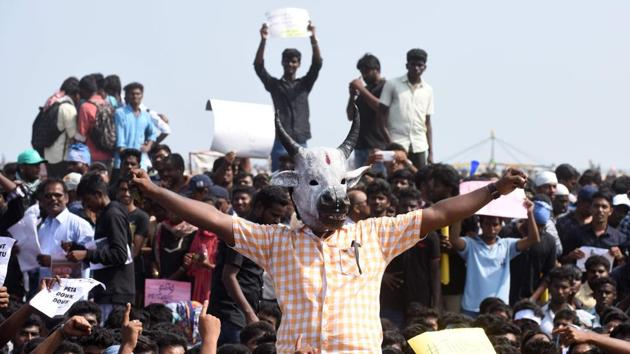 Indian students shout slogans and hold placards during a demonstration against the ban on the Jallikattu bull taming ritual, and calling for a ban on animal rights orgnisation PETA, at Marina Beach at Chennai on January 19, 2017.(AFP)