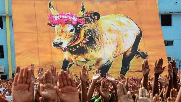 Rapoosal is wallowing in pride after three people died in the village in a Jallikattu bout.(V Srinivasulu/HT Photo)