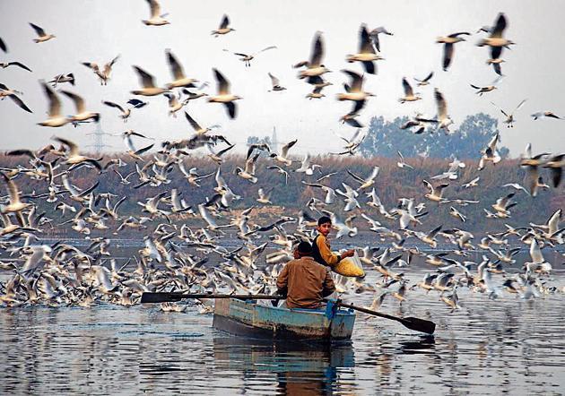 Around 590 birds belonging to 23 species were spotted in 2016, while in 2015, 641 birds belonging to 19 species were seen, it says.(HT Photo)