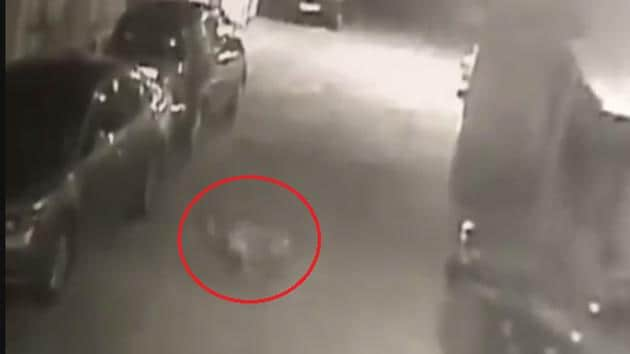 A video grab of the leopard that was chased by dogs in a housing society in Goregaon, Mumbai.