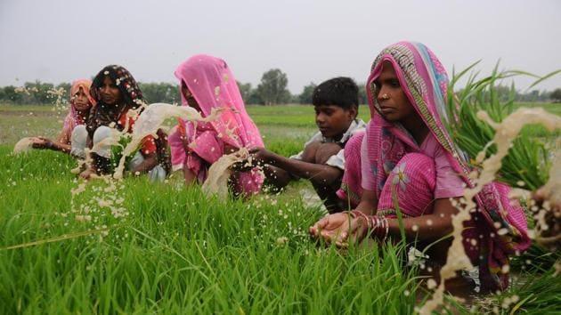 Kannauj, Barabanki, Farukkhabad, Firozabad and Agra are some big potato producing areas in UP.(Representational Photo)