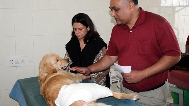 The golden retriever with its owners while being treated at GADVASU in Ludhiana on Tuesday.(Jagtinder Singh Grewal/HT Photo)