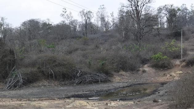 Dried up lantana bushes in Bandipur makes matters worse as it converts ground fires into canopy fires, where even trees were affected.(Vikram Gopal/Hindustan Times)