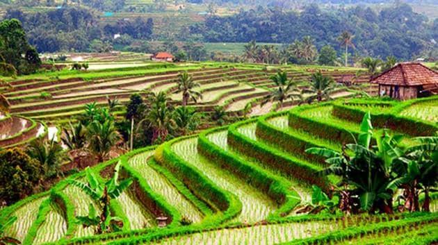 Bali tops the list of TripAdvisor's Traveller's Choice destinations for 2017.(Istock)