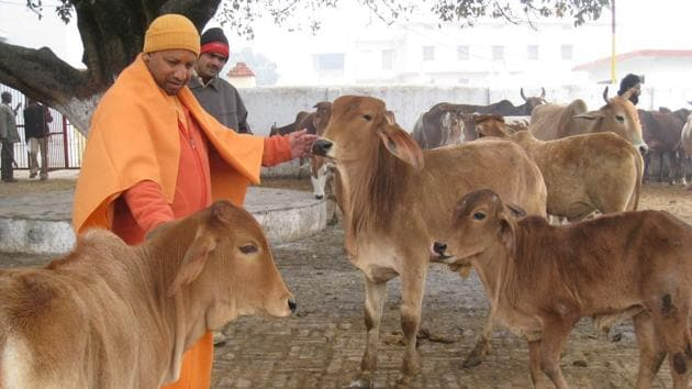 Uttar Pradesh chief minister Yogi Adityanath feeds cows at a gaushala in Gorakhpur. As of now, 98 per cent of the respondents have supported the government's formulation of strict laws to curb cow slaughter.(HT file photo)