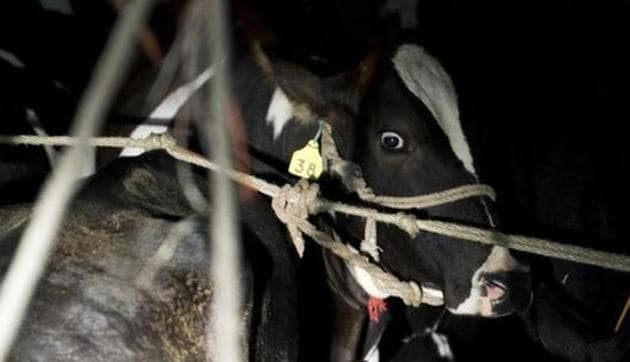 Three construction workers including a minor were arrested in Assam for allegedly displaying beef at a marketplace and hurting religious sentiments. Cow slaughter is banned in Assam.(AFP file photo)