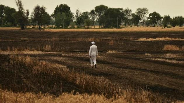 A farmer walks through a field of burnt wheat at Othian village near Rajasansi, around 35km from Amritsar, on Saturday.(Gurpreet Singh/HT Photo)